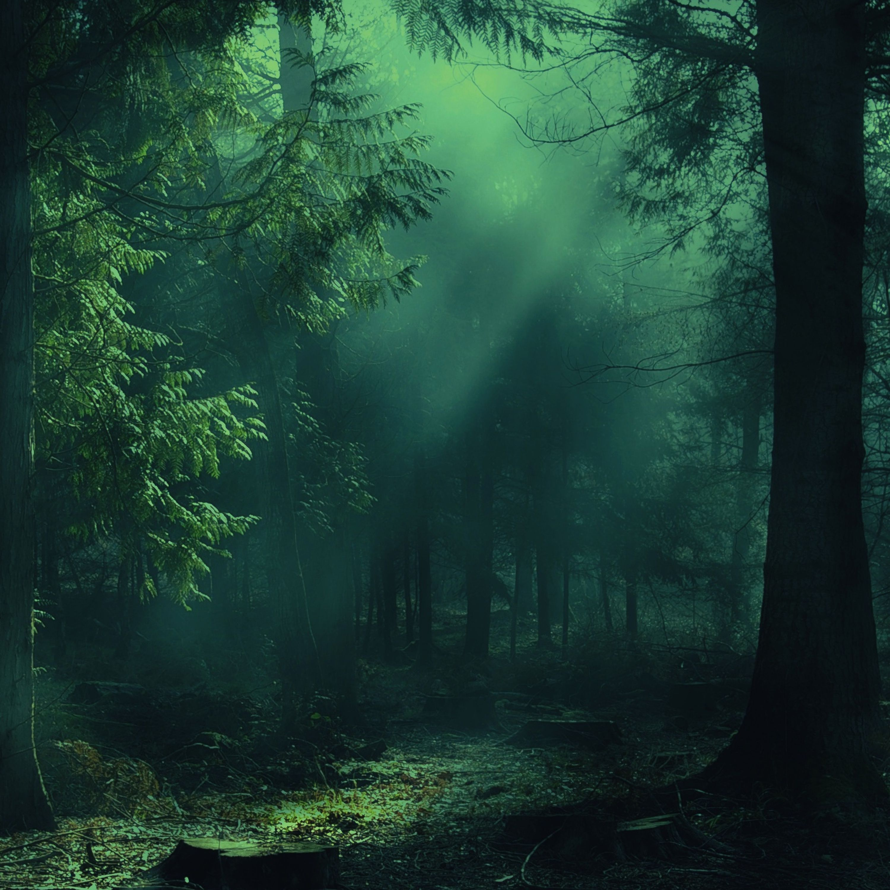 155402 download wallpaper Trees, Forest, Light, Shine, Nature, Fog, Shadows screensavers and pictures for free