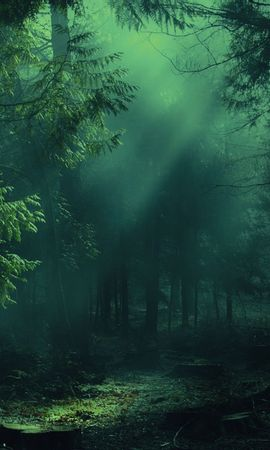 155402 скачать обои Природа, Лес, Туман, Деревья, Тени, Свет - заставки и картинки бесплатно