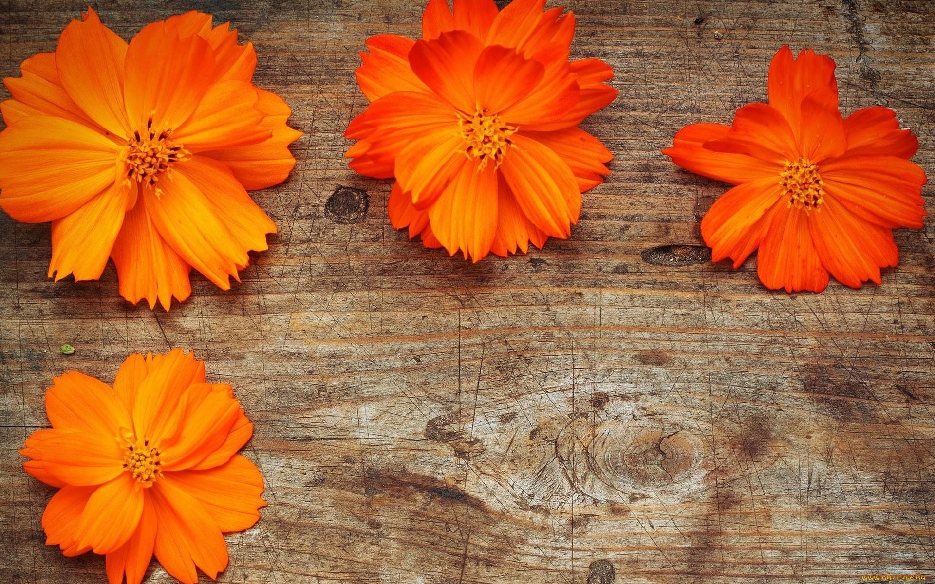21489 скачать обои Растения, Цветы - заставки и картинки бесплатно