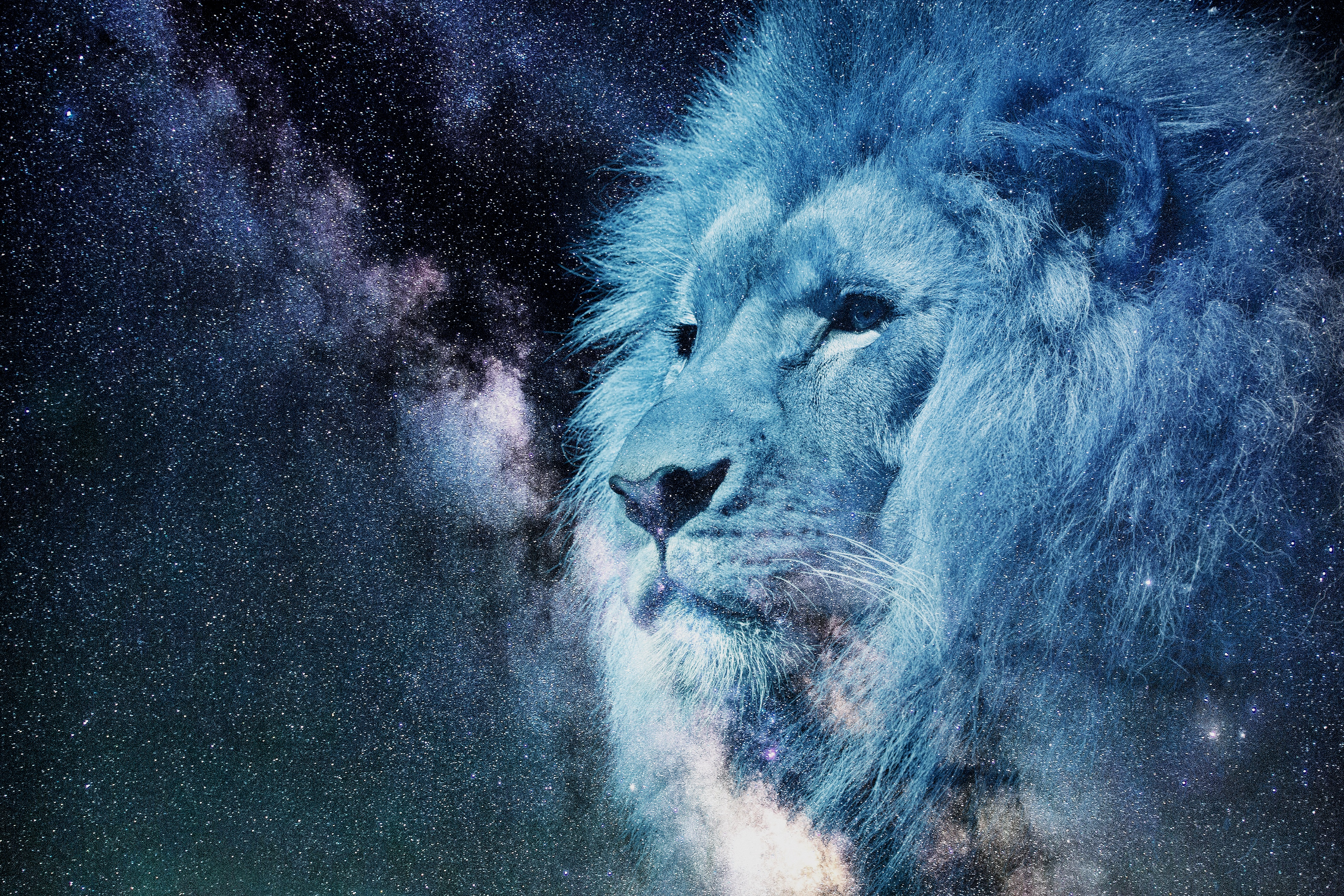 114409 download wallpaper Art, Stars, Muzzle, Starry Sky, Lion, Predator, Photoshop, King Of Beasts, King Of The Beasts screensavers and pictures for free