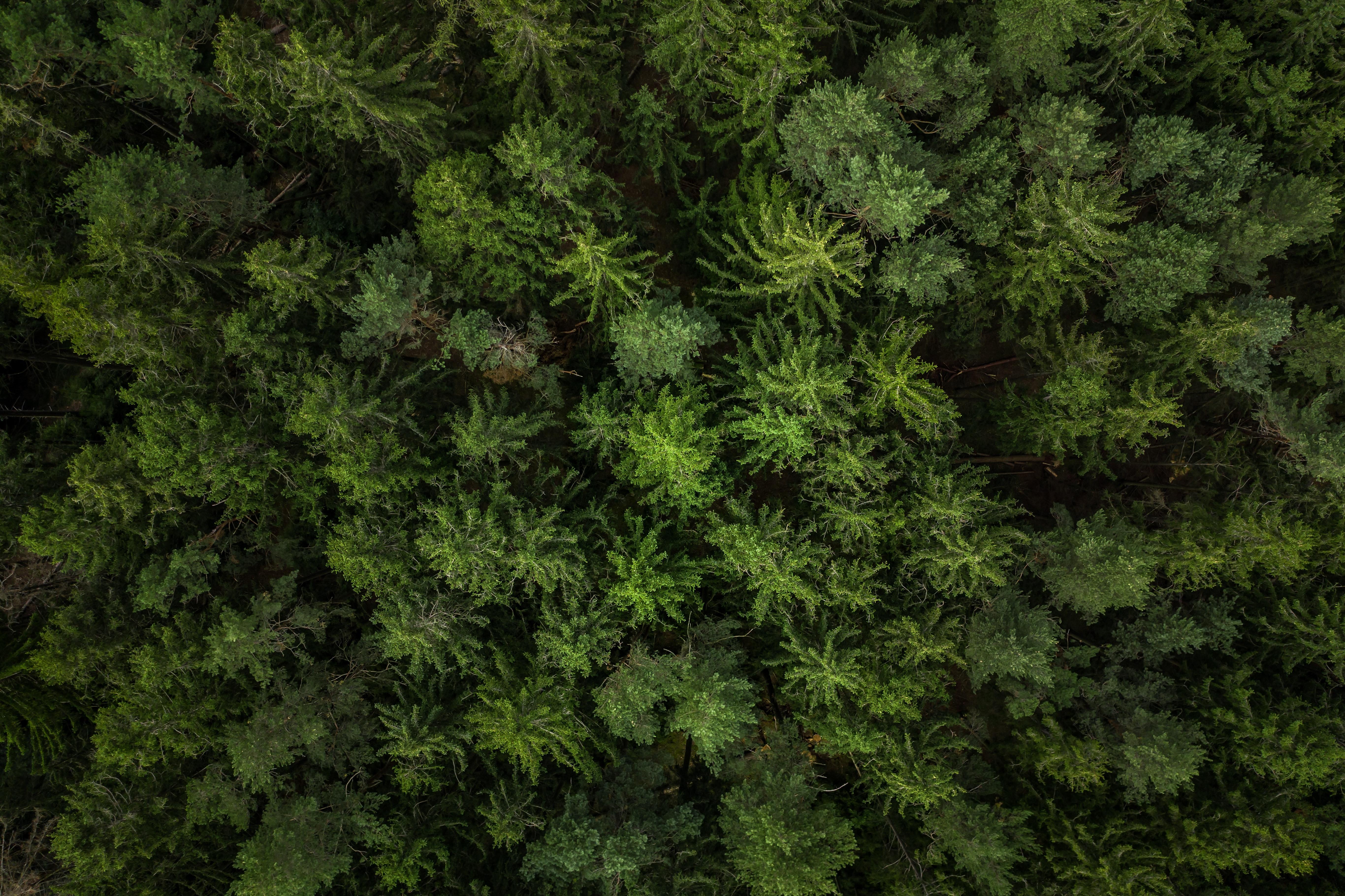 106072 скачать обои Лес, Вид Сверху, Зеленый, Природа, Елки - заставки и картинки бесплатно