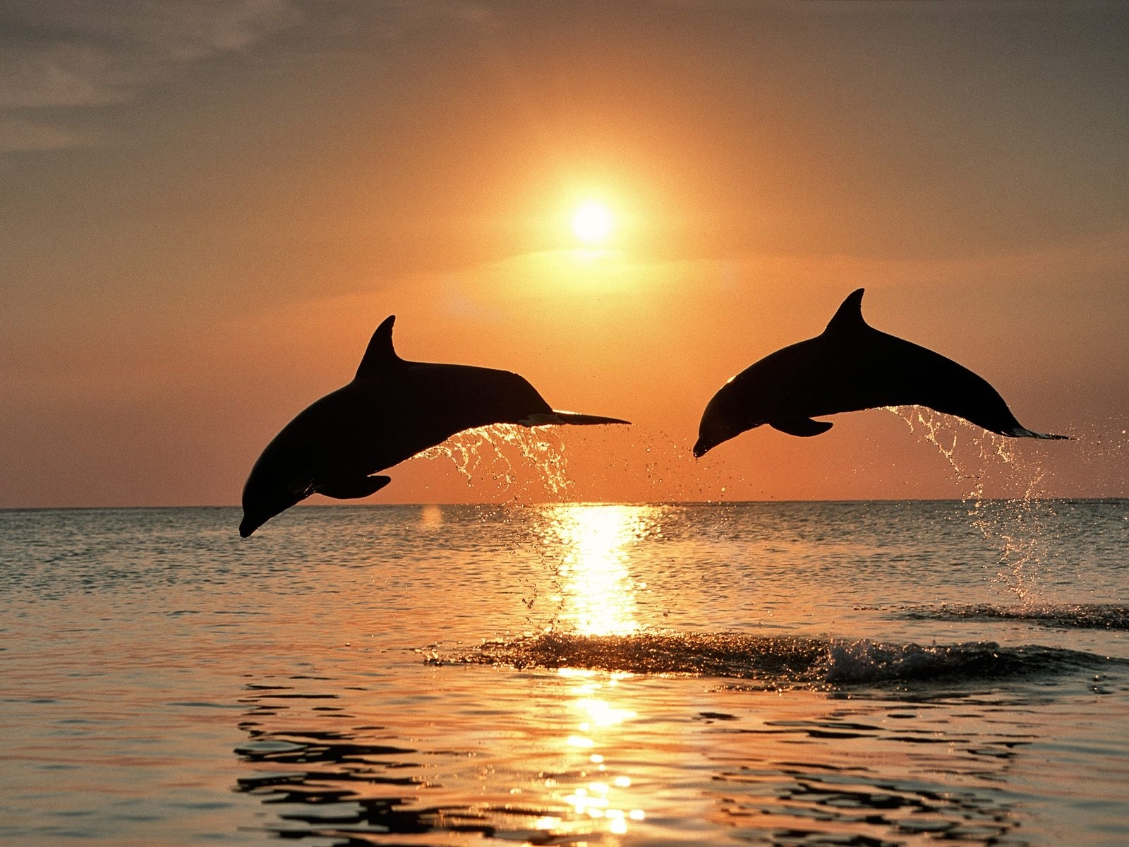 13990 download wallpaper Animals, Sunset, Dolfins, Sea, Sun screensavers and pictures for free