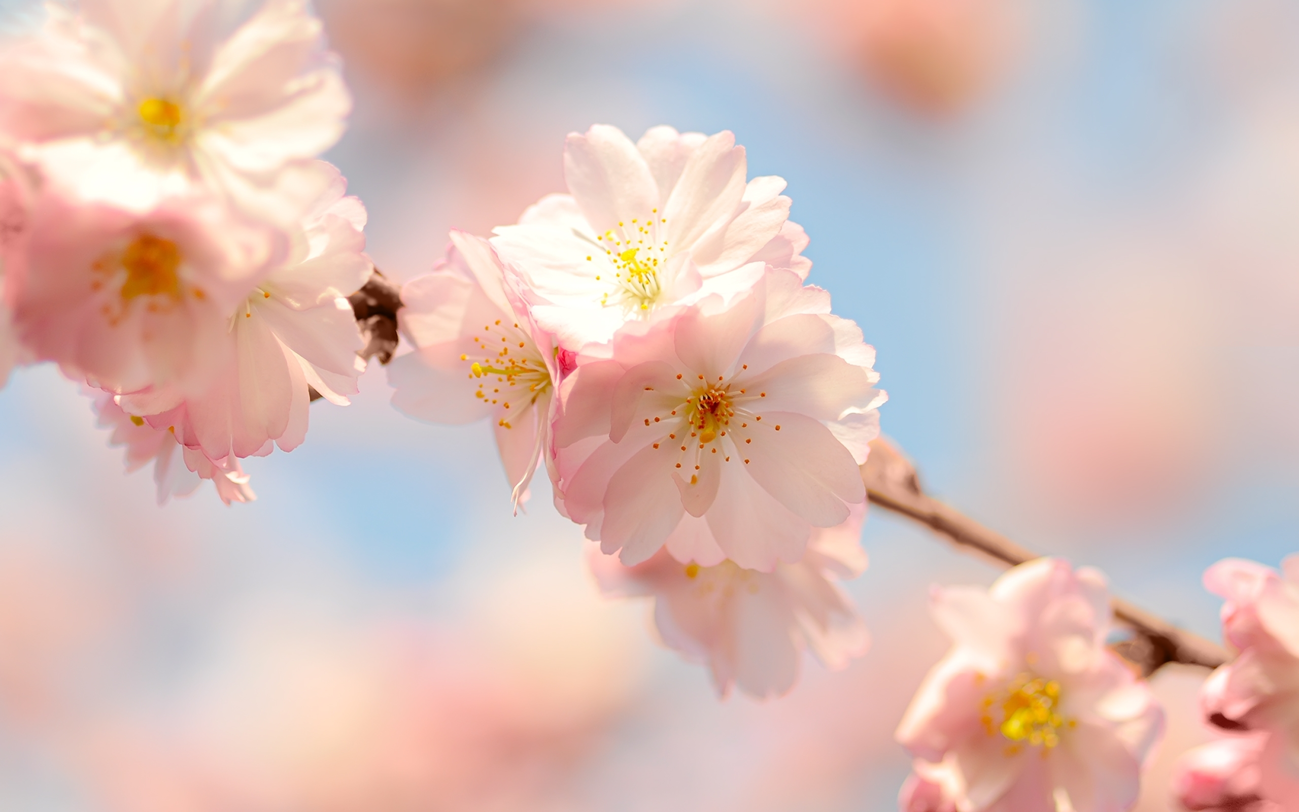 26082 скачать обои Растения, Цветы - заставки и картинки бесплатно