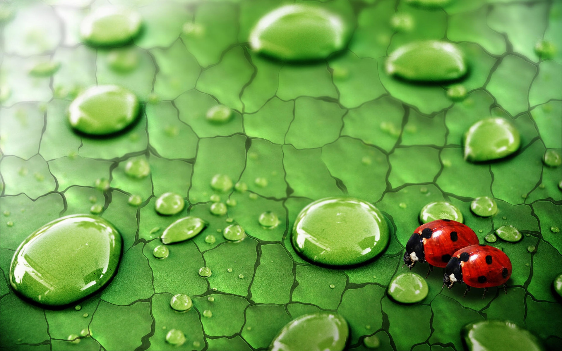 32508 download wallpaper Insects, Ladybugs screensavers and pictures for free