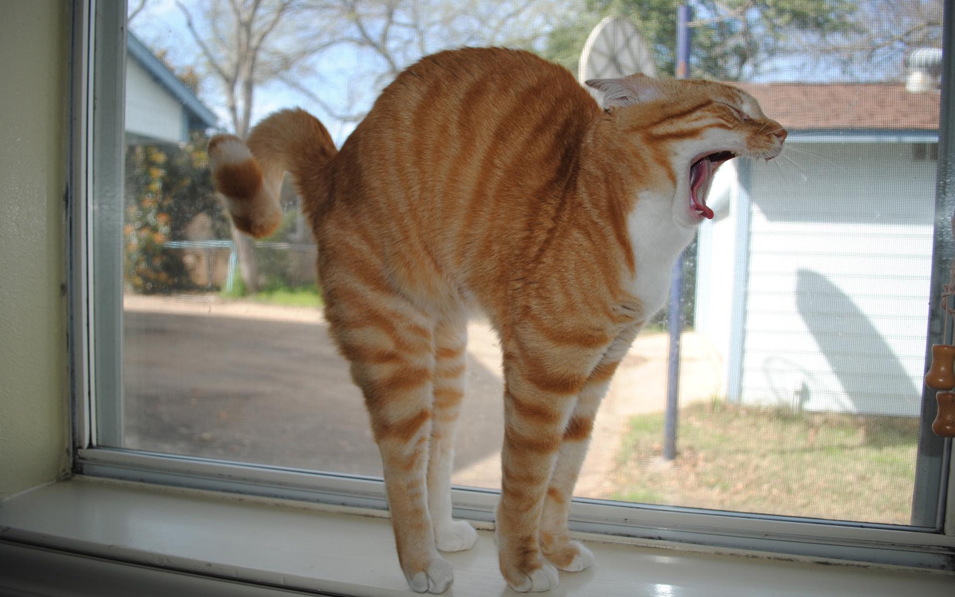 23933 скачать обои Животные, Кошки (Коты, Котики) - заставки и картинки бесплатно