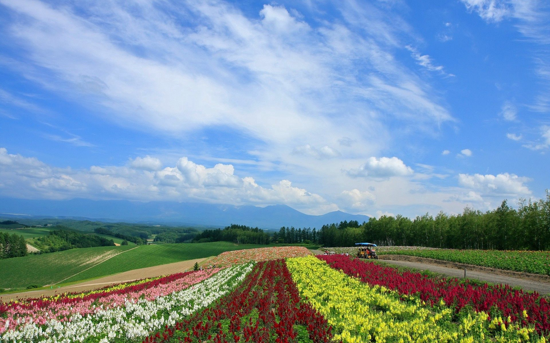 141013 download wallpaper Nature, Flowers, Poppies, Field, Japan, Plantation, Rows, Ranks screensavers and pictures for free