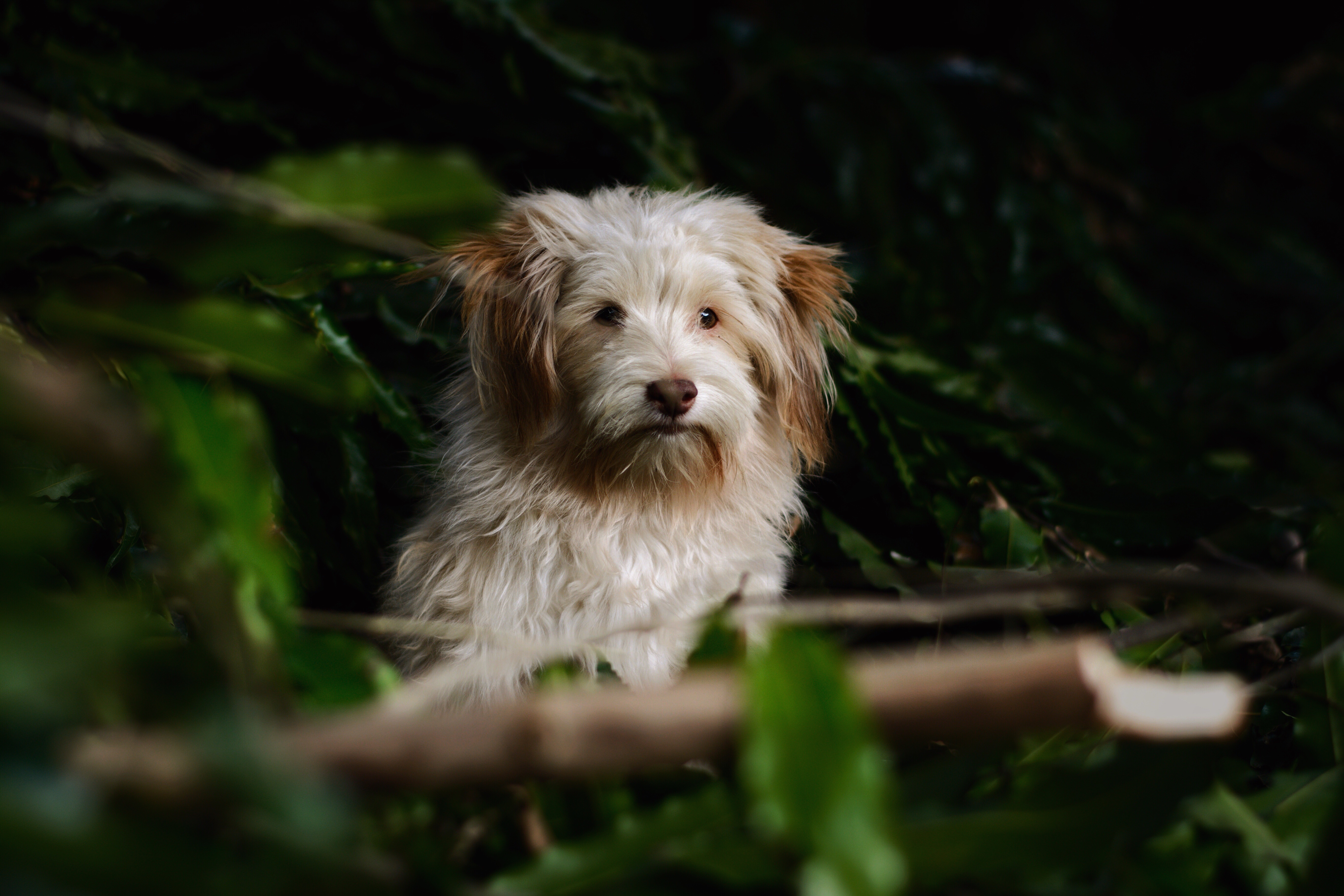 146830 download wallpaper Animals, Dog, Fluffy, Muzzle, Blur, Smooth screensavers and pictures for free