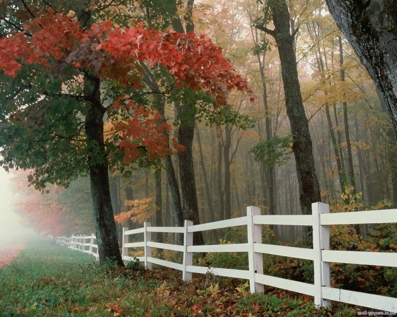 4247 скачать обои Пейзаж, Деревья, Осень - заставки и картинки бесплатно
