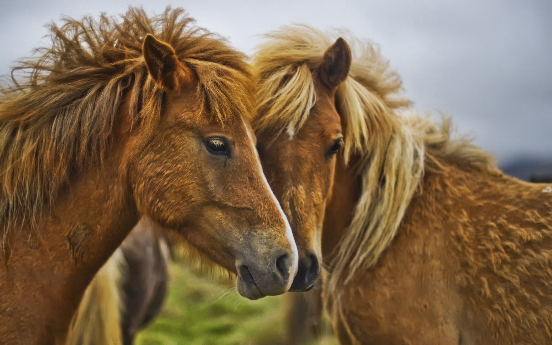 67786 download wallpaper Animals, Horses, Couple, Pair, Care, Tenderness screensavers and pictures for free