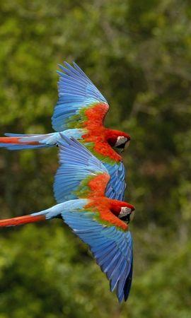 44270 baixar papel de parede Animais, Aves, Papagaios - protetores de tela e imagens gratuitamente