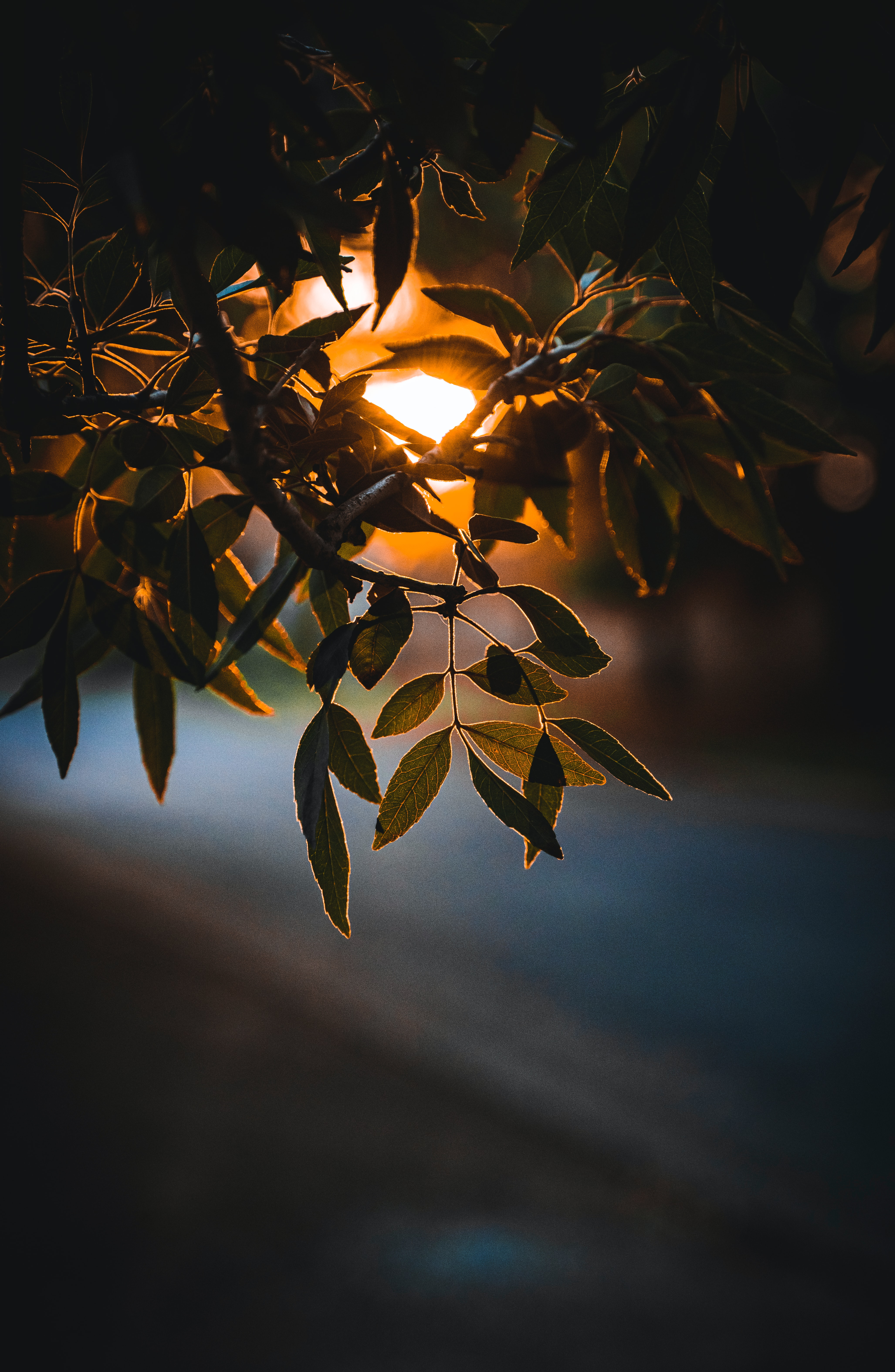 137771 download wallpaper Nature, Leaves, Branch, Glow, Sun screensavers and pictures for free
