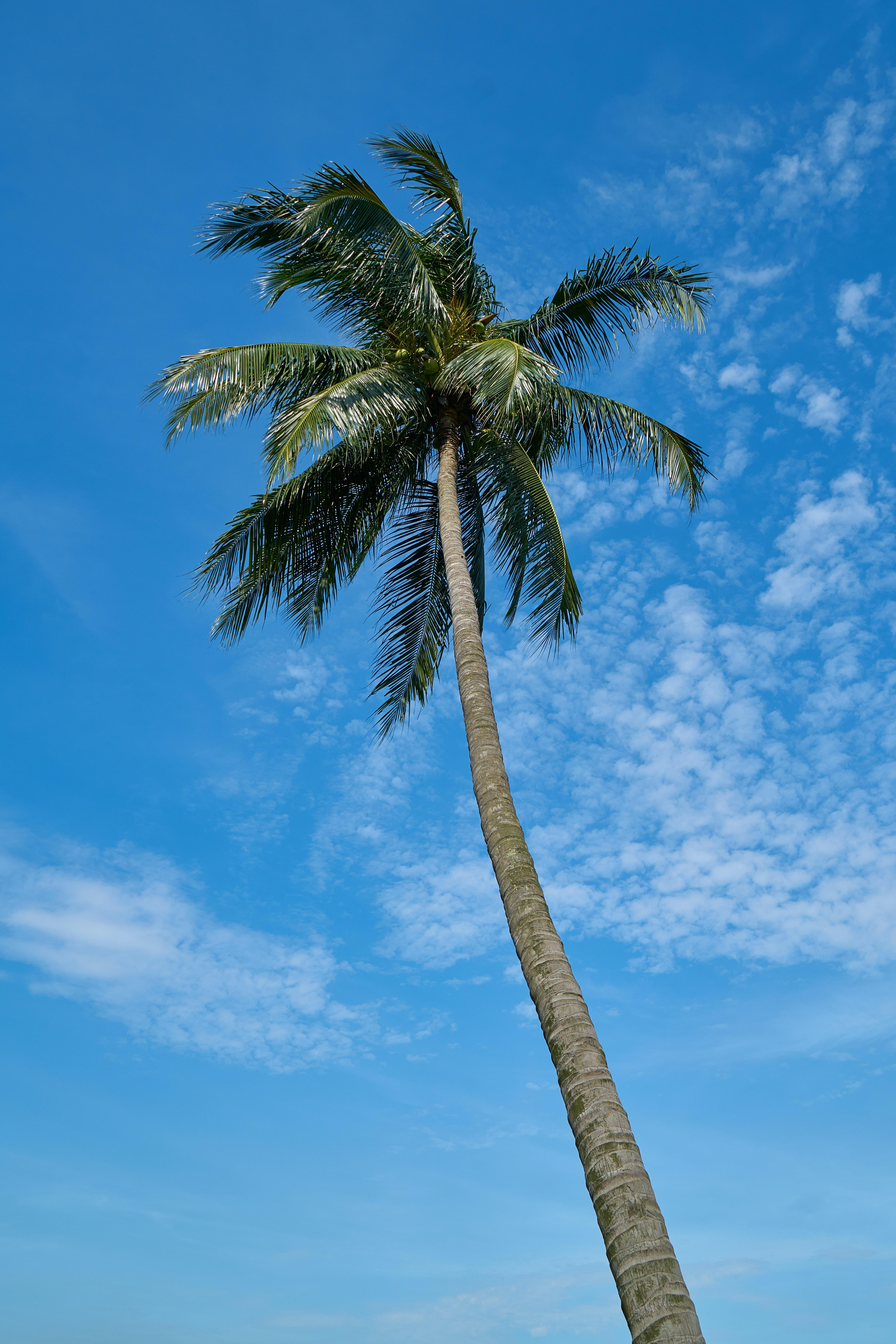 145383 免費下載壁紙 性质, 棕榈, 帕尔马, 天空, 云, 热带, 热带地区 屏保和圖片