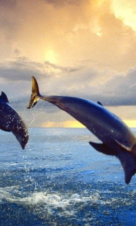 31709 baixar papel de parede Animais, Golfinhos - protetores de tela e imagens gratuitamente