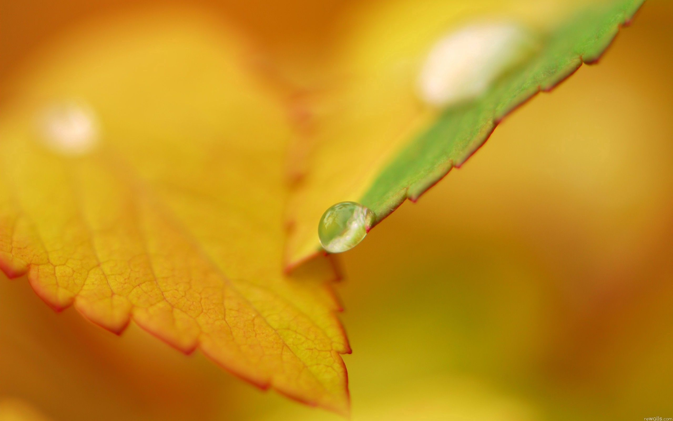 82929 download wallpaper Macro, Sheet, Leaf, Autumn, Drops screensavers and pictures for free