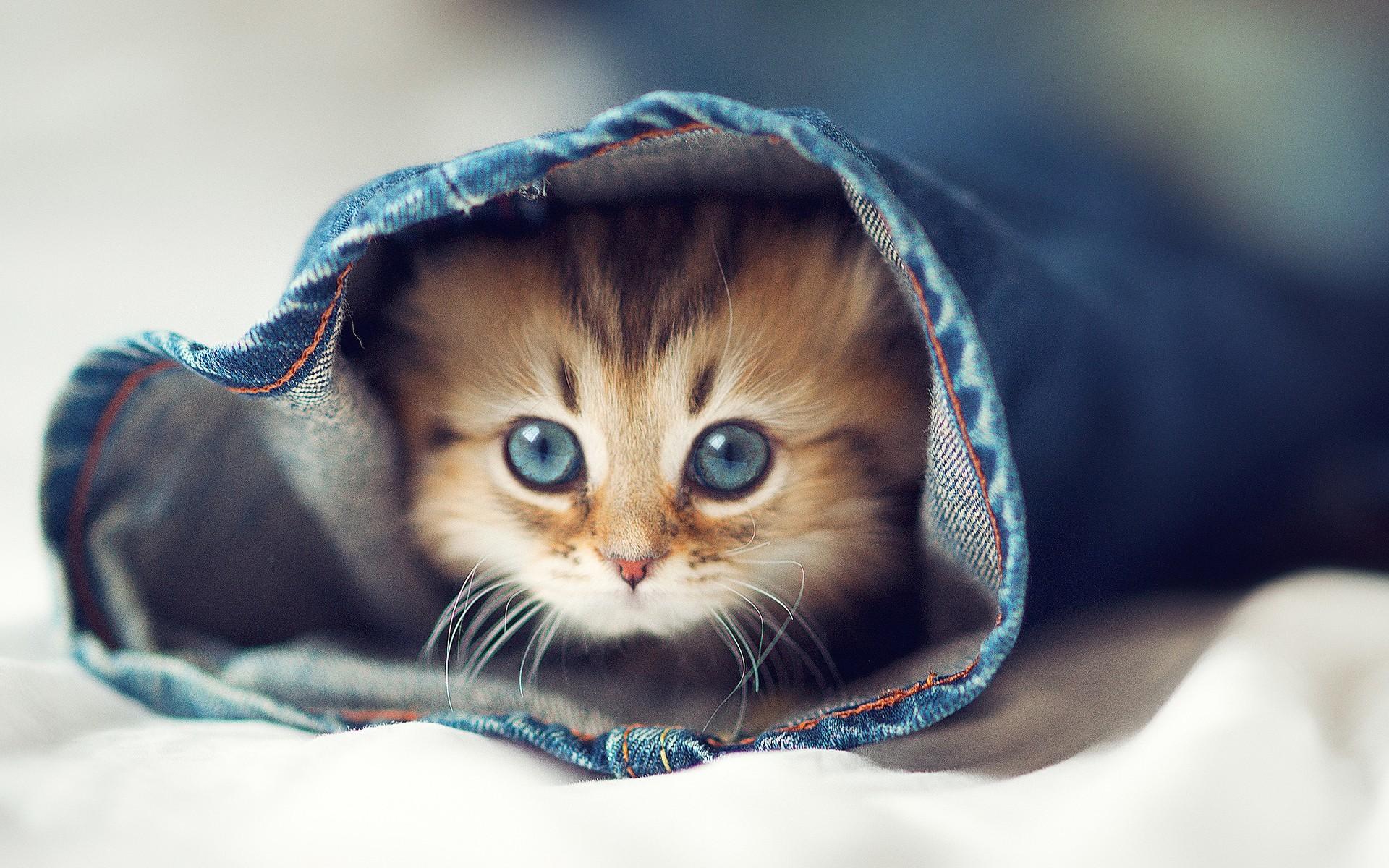 38666 скачать обои Кошки (Коты, Котики), Животные - заставки и картинки бесплатно