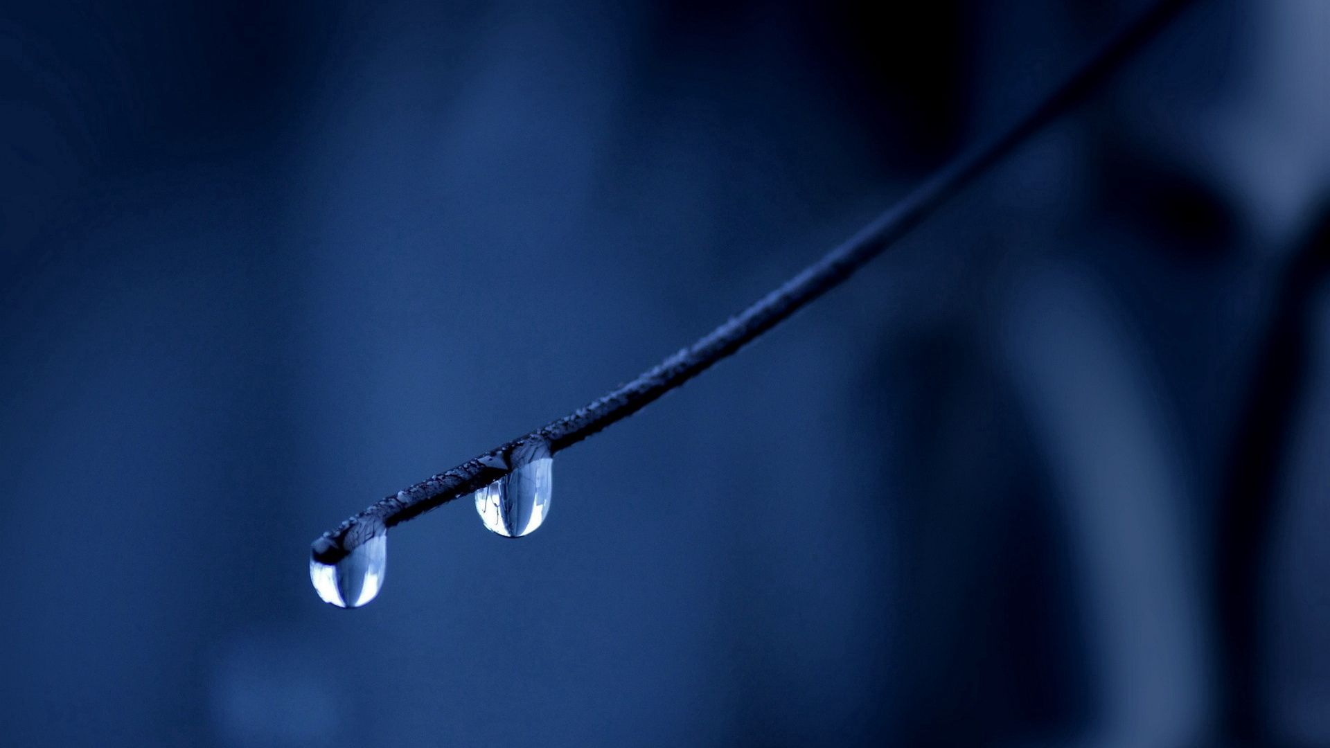 151914 download wallpaper Macro, Branch, Drops, Background, Stains, Spots screensavers and pictures for free