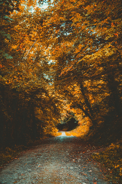 75224壁紙のダウンロード自然, 公園, 秋, 道, パス, 森林, 森, 葉, 木の葉, 木-スクリーンセーバーと写真を無料で