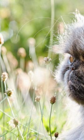 157108 download wallpaper Animals, Cat, Fluffy, Flowers screensavers and pictures for free