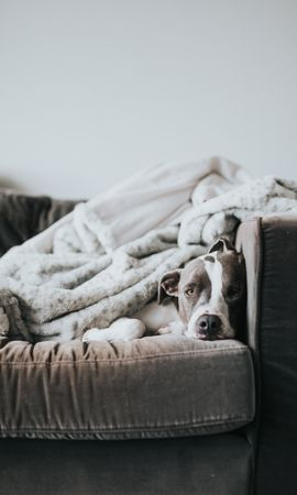 105882 Screensavers and Wallpapers Funny for phone. Download Animals, Dog, Bulldog, Funny, Sleeping, Asleep, Sofa pictures for free