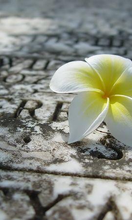 3308 descargar fondo de pantalla Plantas, Flores: protectores de pantalla e imágenes gratis