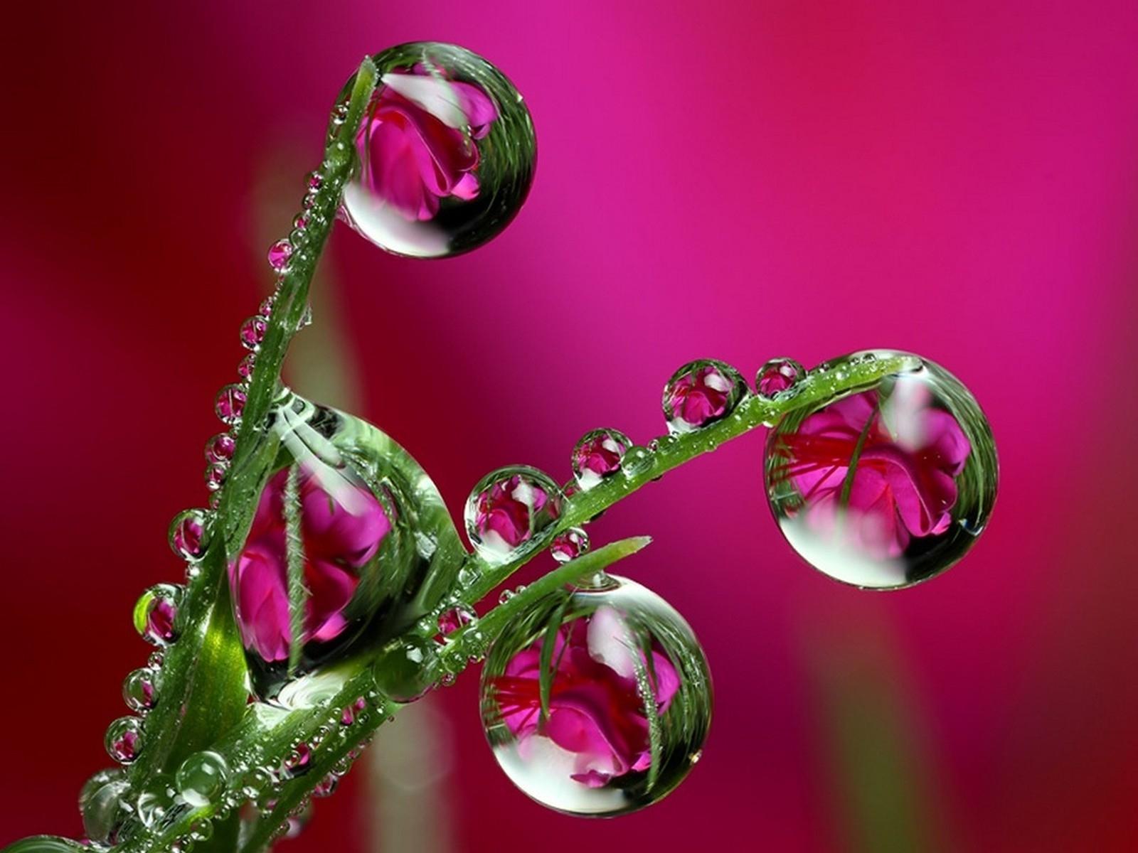 5231 Hintergrundbild herunterladen Pflanzen, Drops - Bildschirmschoner und Bilder kostenlos