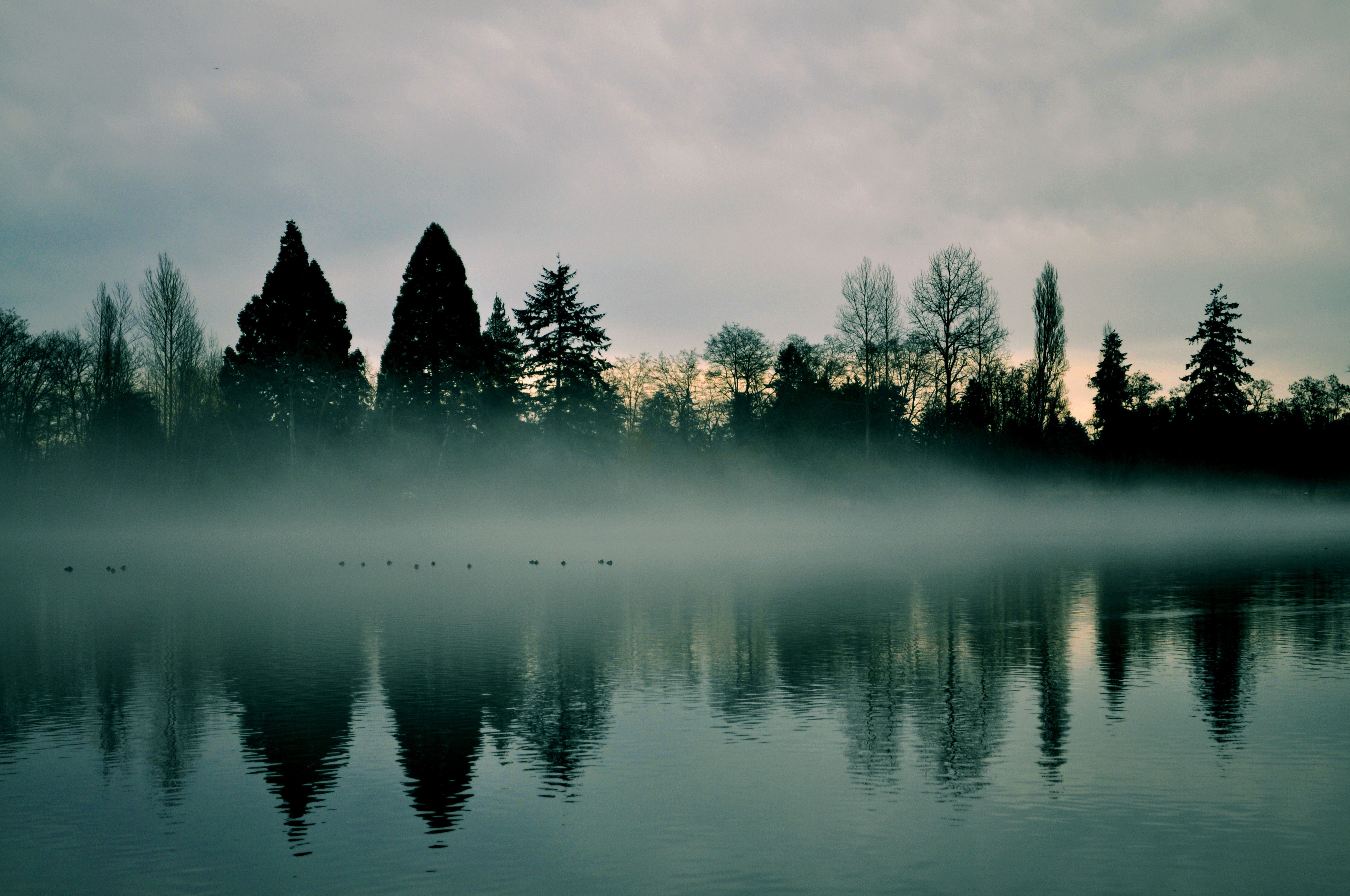 152198 download wallpaper Nature, Rivers, Trees, Reflection, Fog screensavers and pictures for free