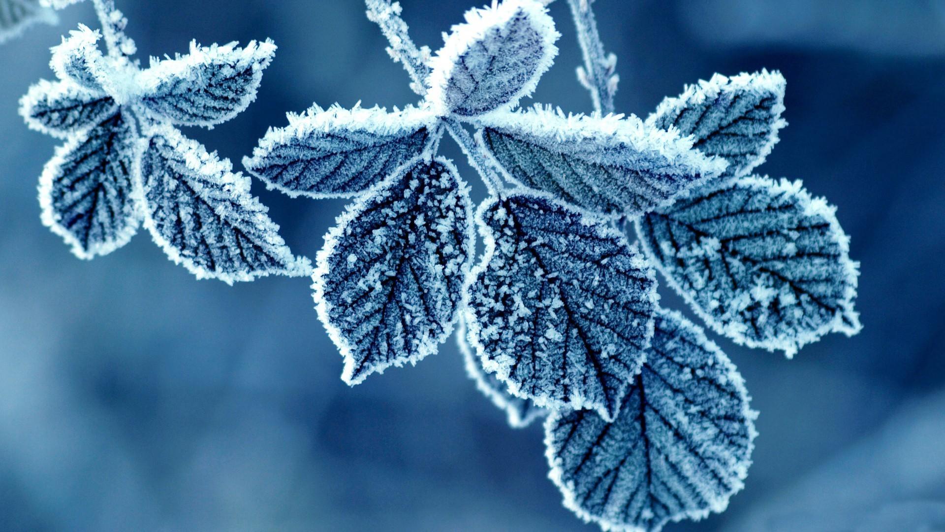 23542 скачать обои Зима, Фон, Листья, Снег - заставки и картинки бесплатно