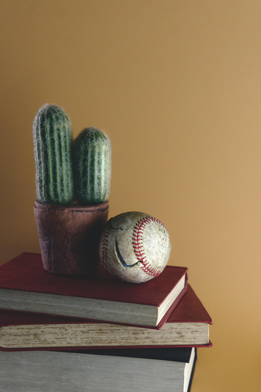 122175 descargar fondo de pantalla Miscelánea, Misceláneo, Bola, Pelota, Cactus, Cacto, Libros: protectores de pantalla e imágenes gratis