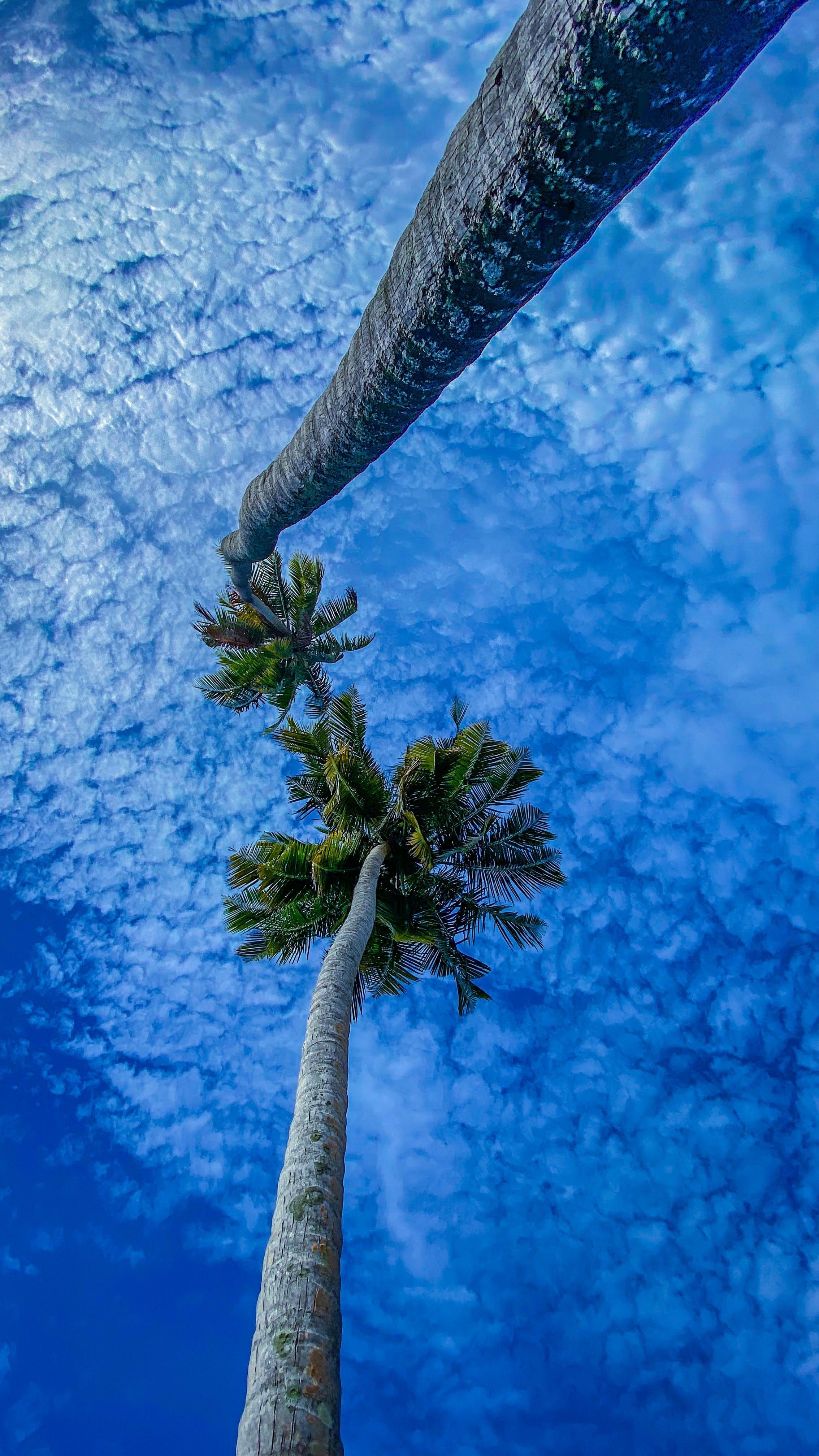 58241 Заставки и Обои Пальмы на телефон. Скачать Природа, Ветки, Небо, Вид Снизу, Пальмы картинки бесплатно