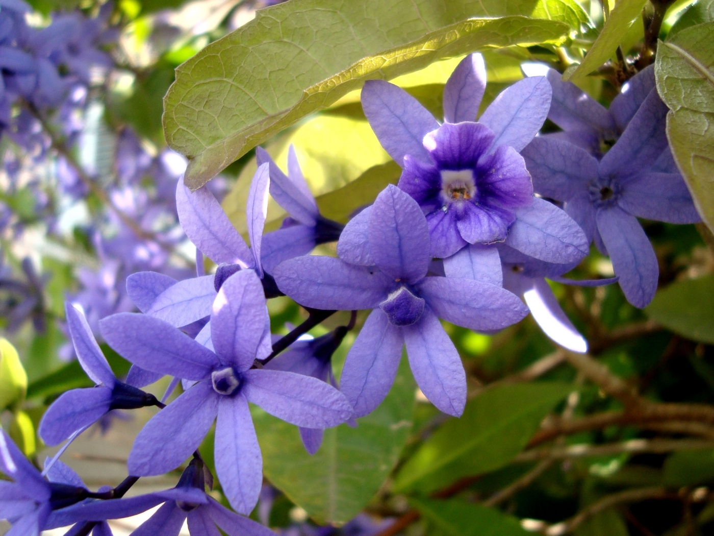 25113 скачать обои Растения, Цветы, Листья - заставки и картинки бесплатно