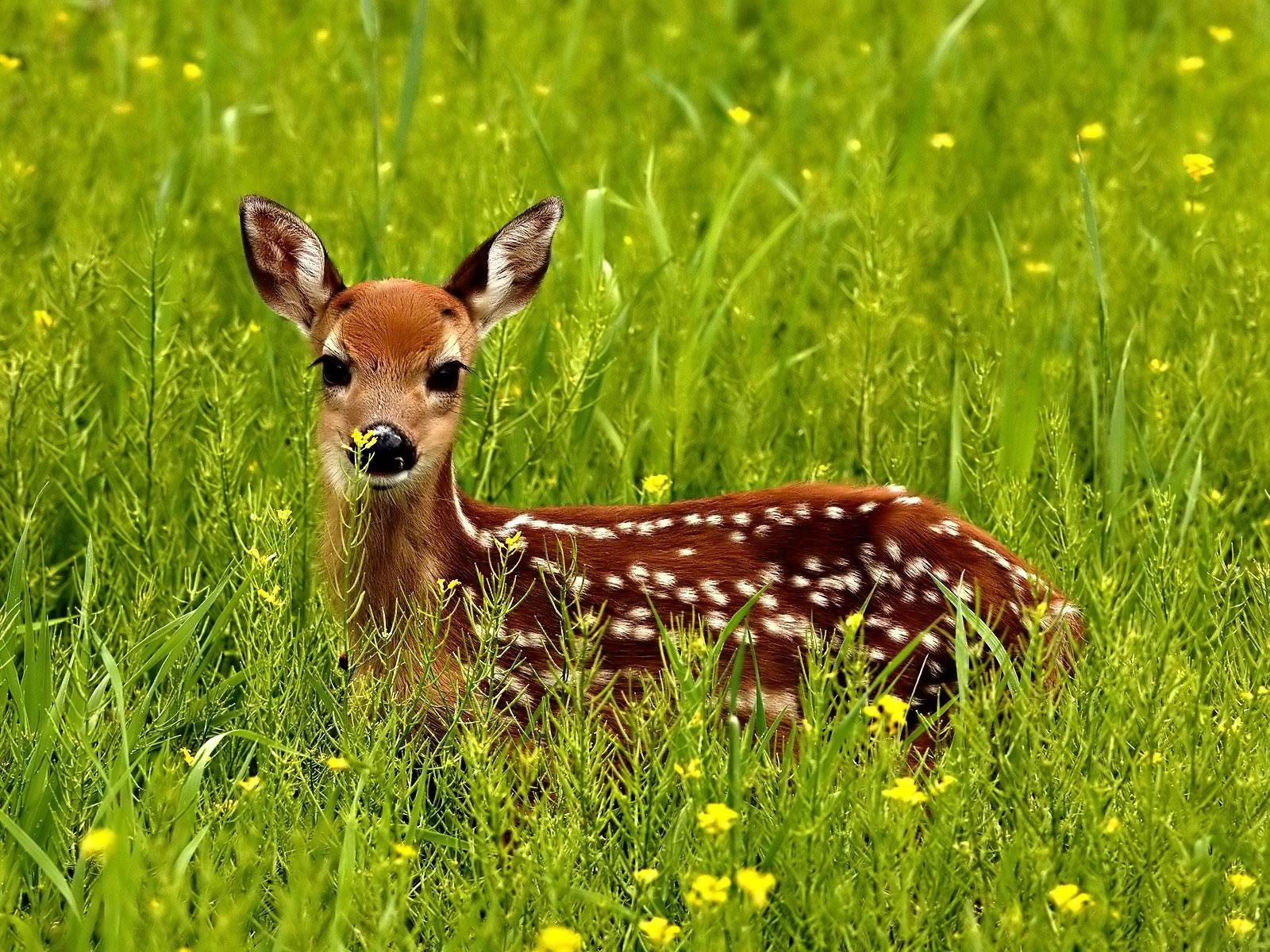 125285 download wallpaper Animals, Fawn, Grass, Spotted, Spotty, Lurk, Hide screensavers and pictures for free