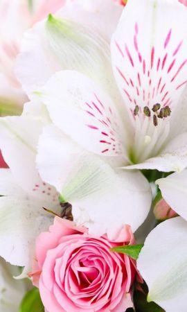 41553 descargar fondo de pantalla Plantas, Flores: protectores de pantalla e imágenes gratis