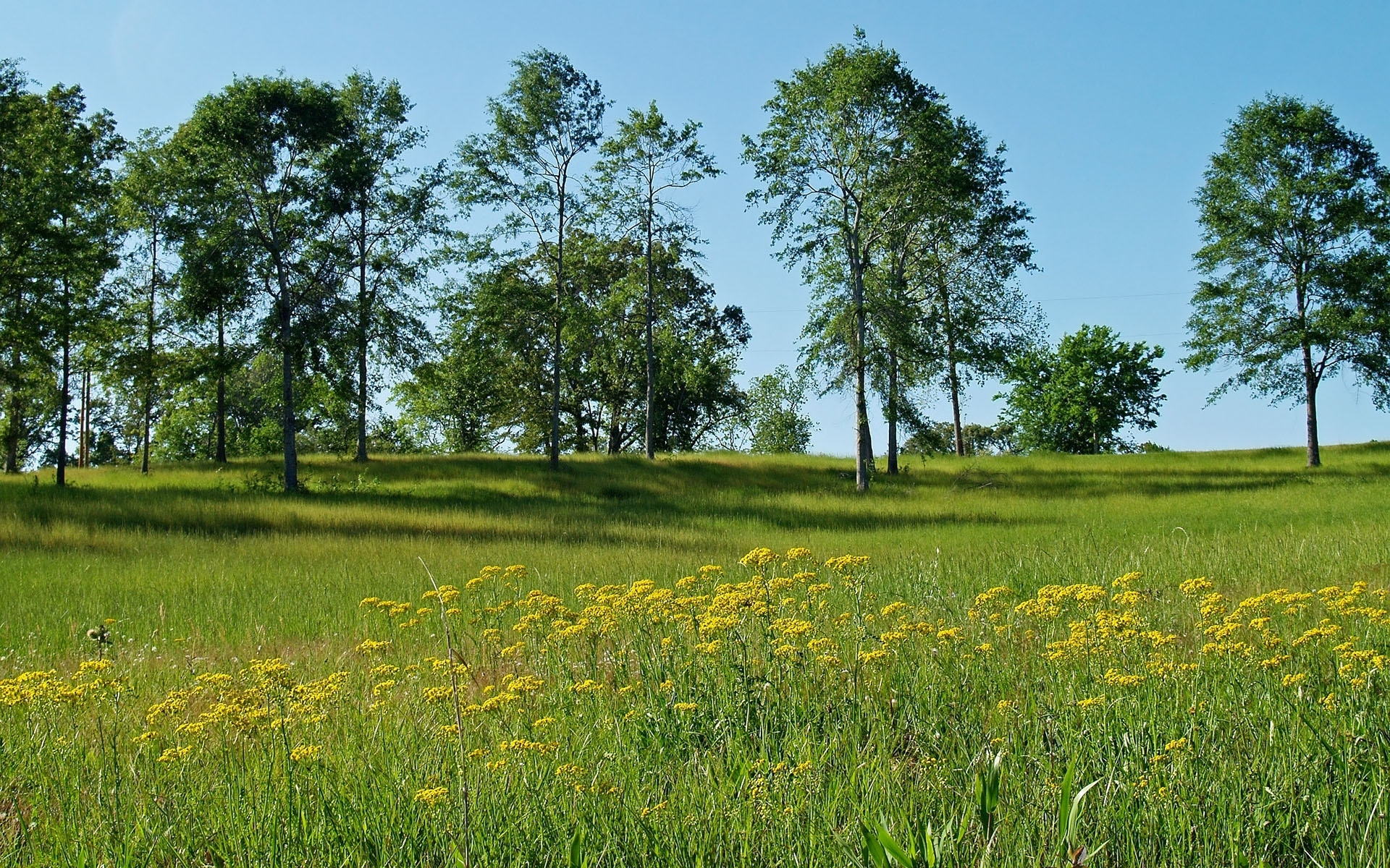 856 download wallpaper Landscape, Trees, Grass screensavers and pictures for free