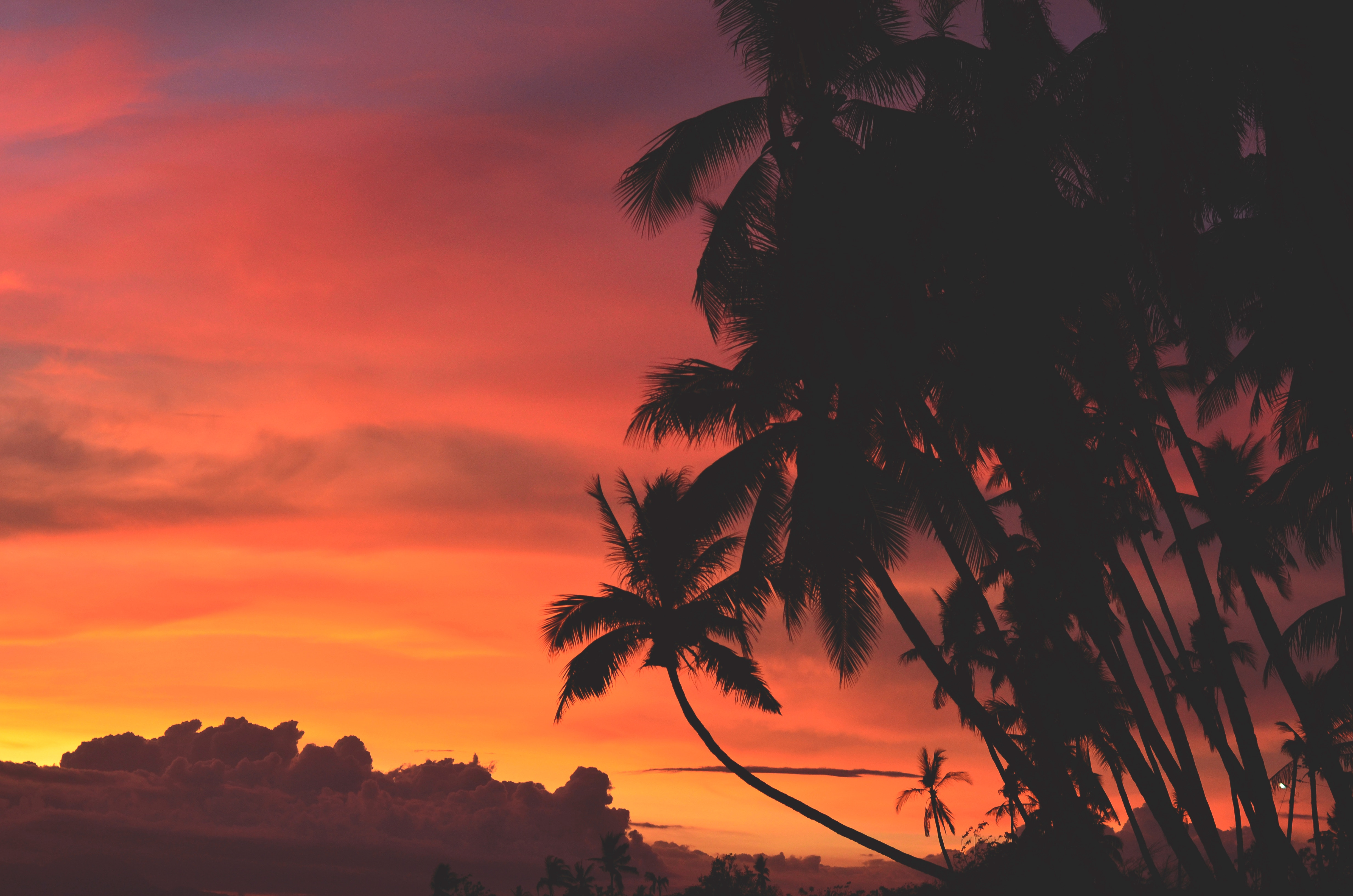 147287 download wallpaper Nature, Sunset, Clouds, Tropics, Sky, Palms screensavers and pictures for free