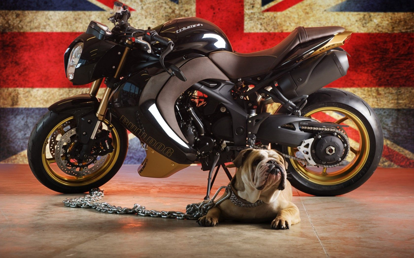 93388 download wallpaper Animals, Bulldog, Dog, Triumph, Flag screensavers and pictures for free