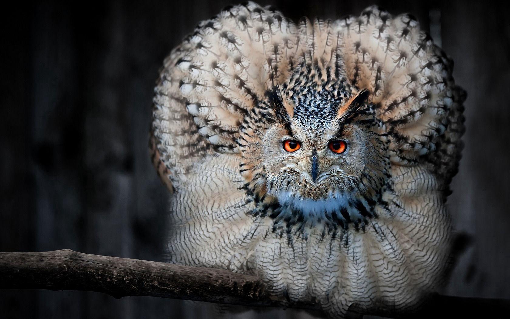 94404 descargar fondo de pantalla Animales, Búho, Búho Real, Lechuza, Pájaro, Depredador, Pluma: protectores de pantalla e imágenes gratis
