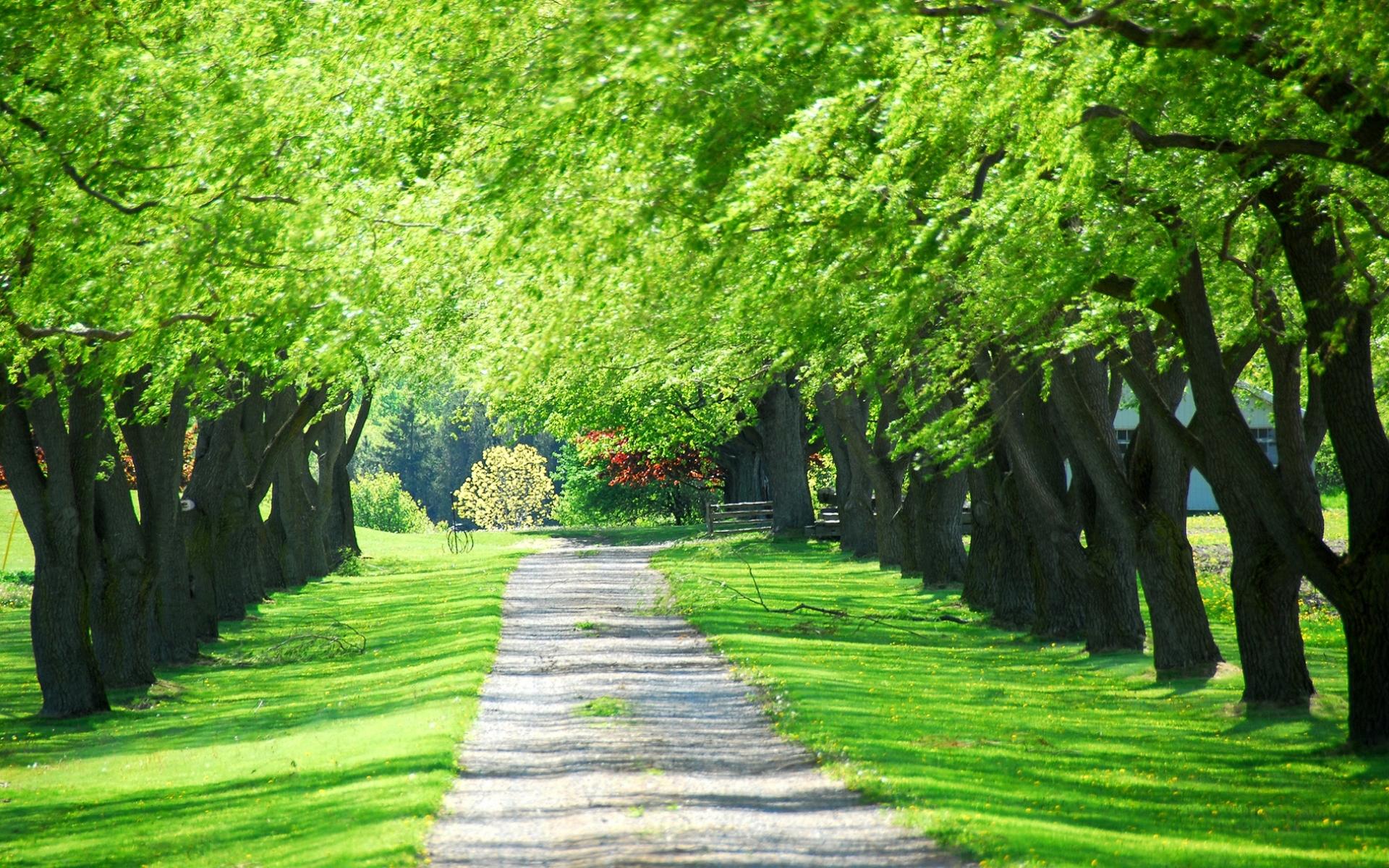 10401 скачать обои Пейзаж, Деревья, Дороги - заставки и картинки бесплатно