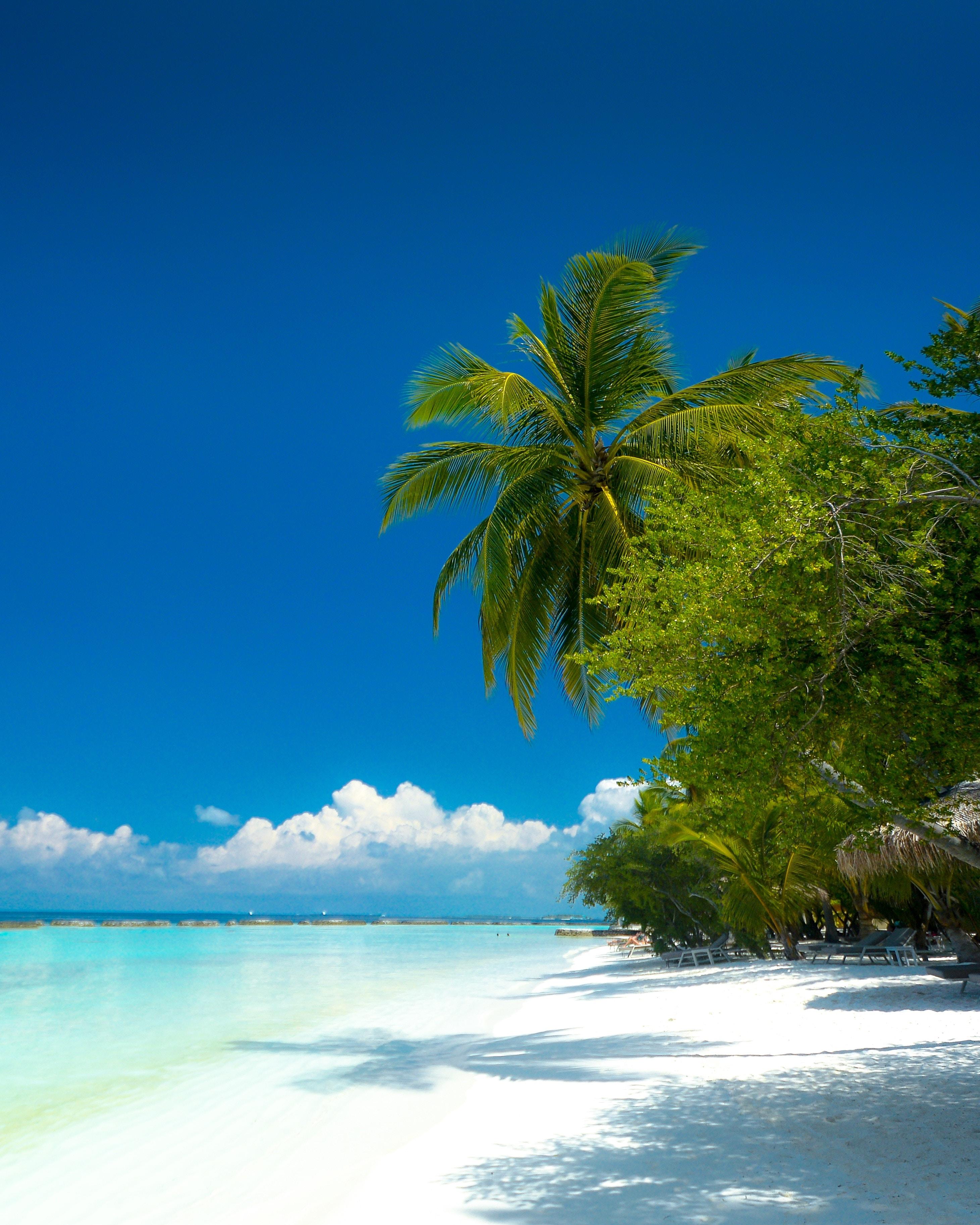 Скачать обои Пляж на телефон бесплатно