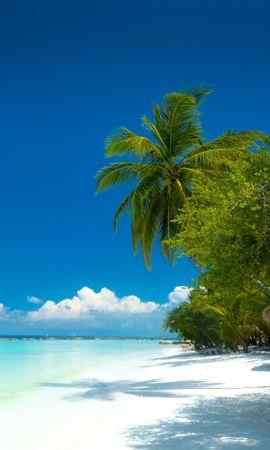 121312壁紙のダウンロード自然, ビーチ, 海洋, 大洋, 熱帯, 海岸, パラダイス, パームス-スクリーンセーバーと写真を無料で
