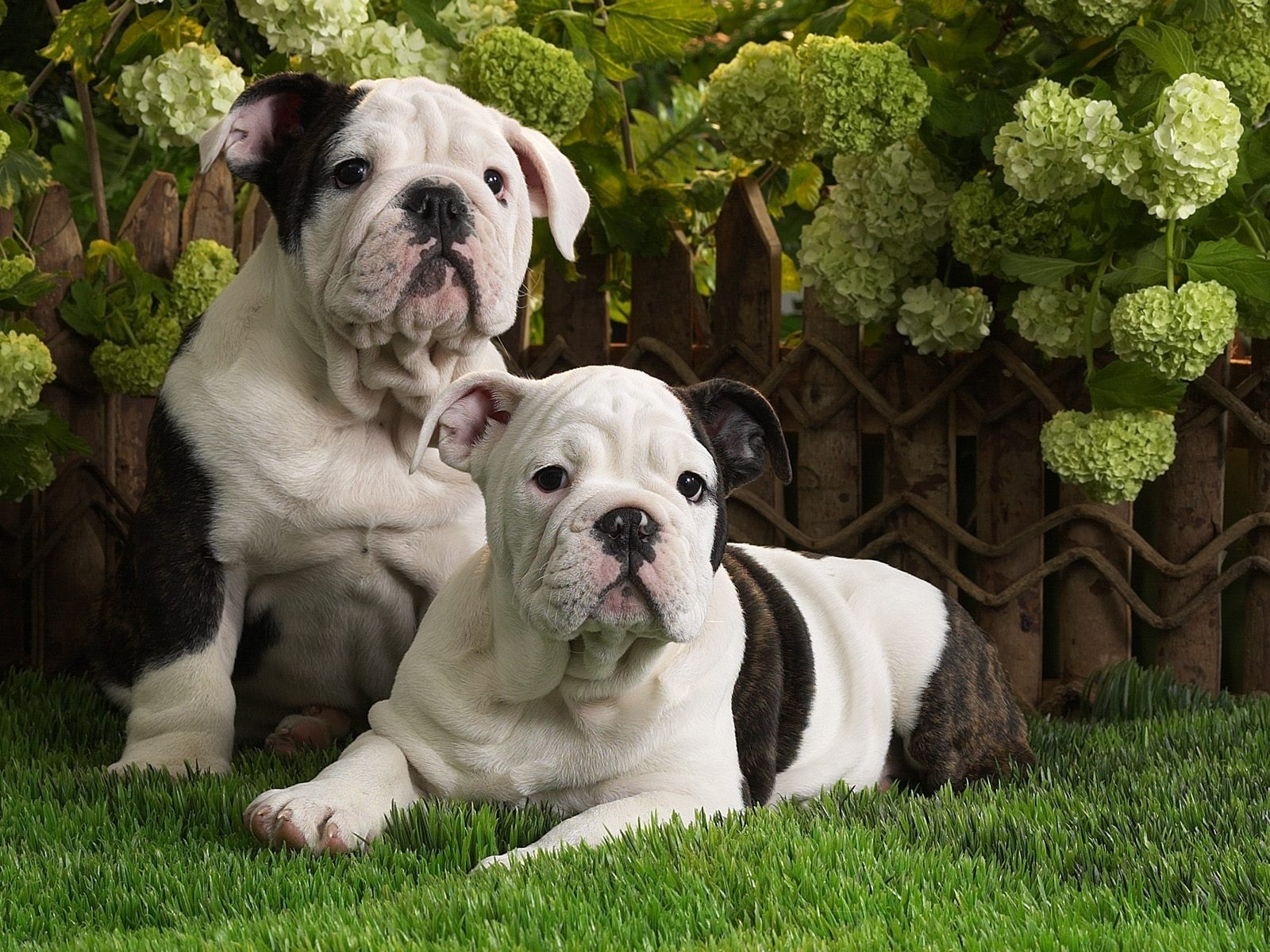 6463 download wallpaper Animals, Dogs screensavers and pictures for free