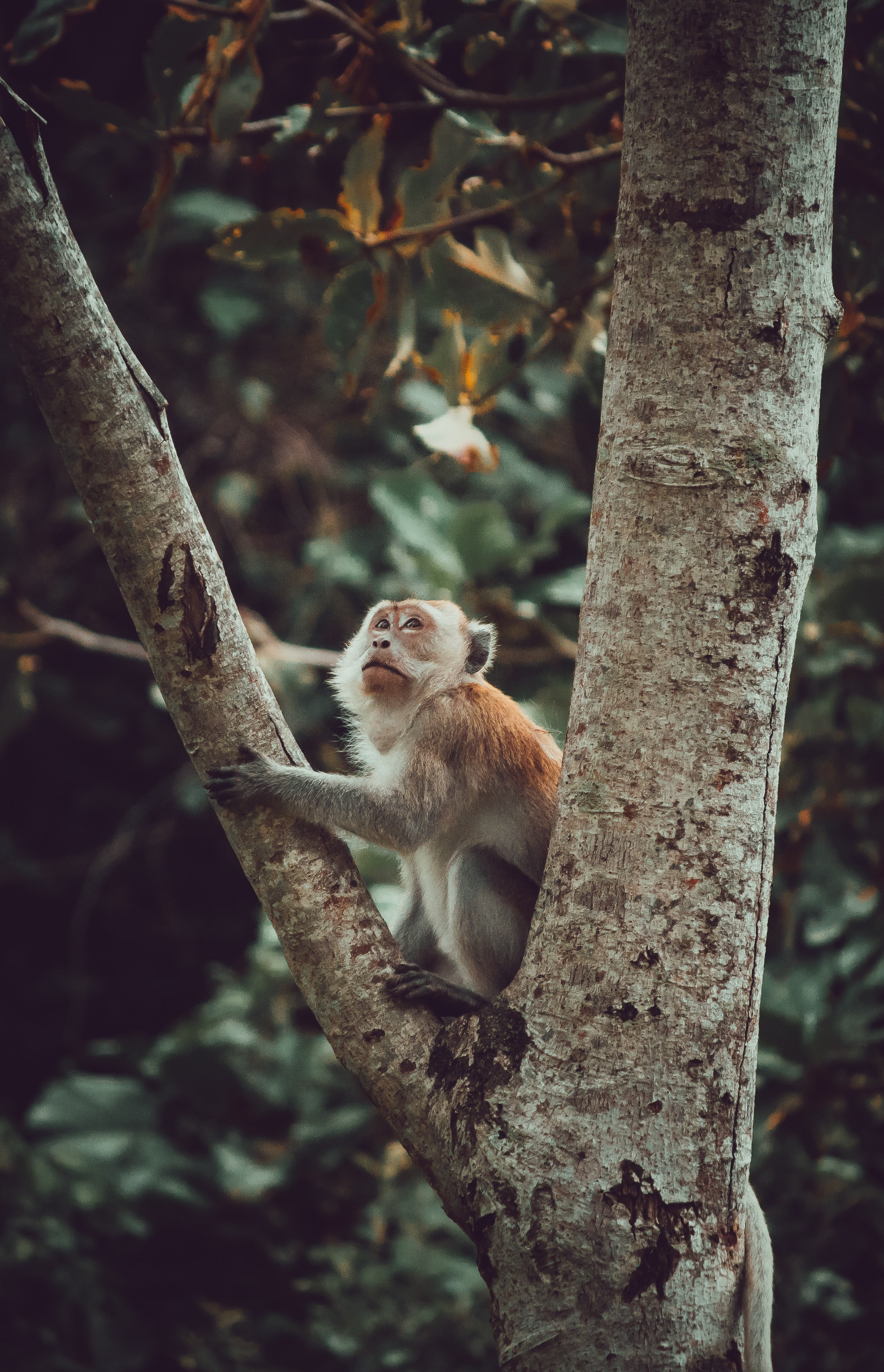 142715 download wallpaper Animals, Monkey, Marmoset, Sight, Opinion, Nice, Sweetheart, Wood, Tree screensavers and pictures for free