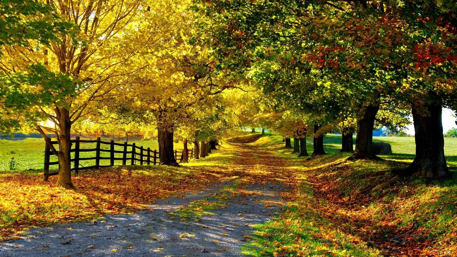 21764 скачать обои Пейзаж, Деревья, Дороги, Осень - заставки и картинки бесплатно