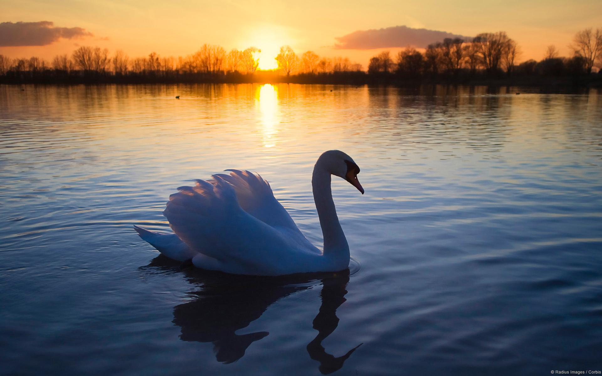 22650 Заставки и Обои Озера на телефон. Скачать Закат, Животные, Пейзаж, Озера, Лебеди картинки бесплатно