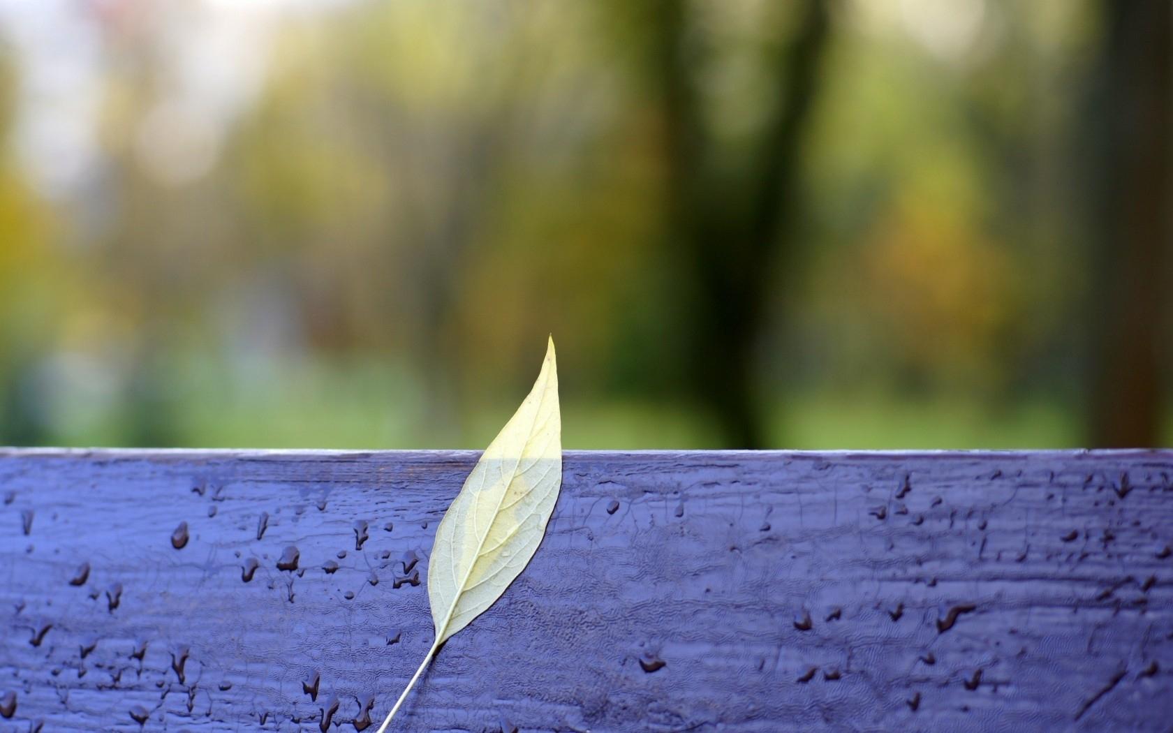 Скачать картинку Листья, Капли, Пейзаж, Растения в телефон бесплатно.