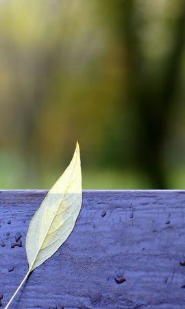21190 скачать обои Растения, Пейзаж, Листья, Капли - заставки и картинки бесплатно
