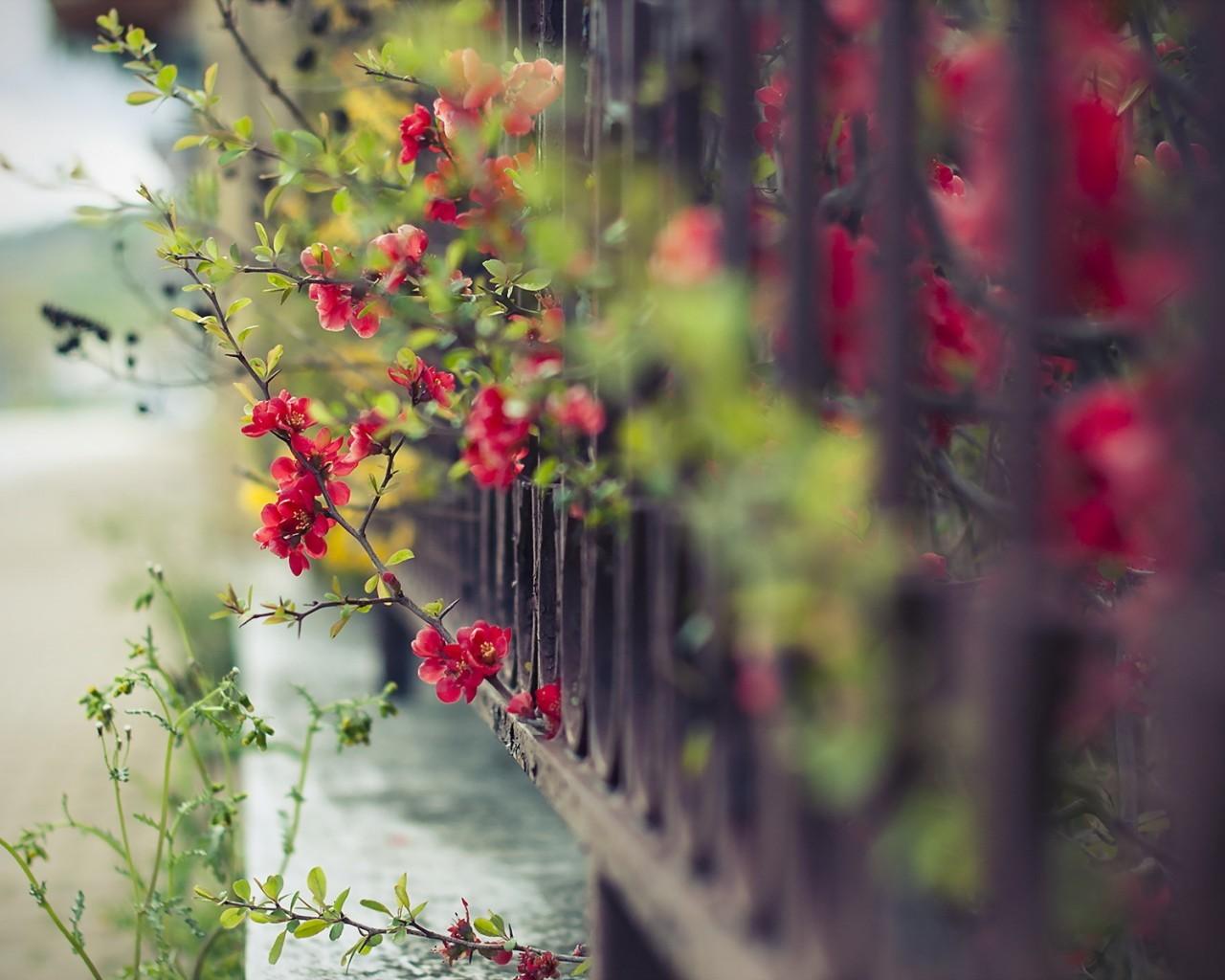 20659 скачать обои Растения, Цветы - заставки и картинки бесплатно