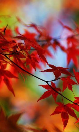 26561 скачать обои Растения, Деревья, Осень, Листья - заставки и картинки бесплатно