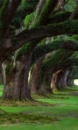 20909 скачать обои Растения, Пейзаж, Деревья - заставки и картинки бесплатно