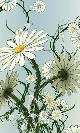 2516 baixar papel de parede Flores, Camomila, Imagens - protetores de tela e imagens gratuitamente
