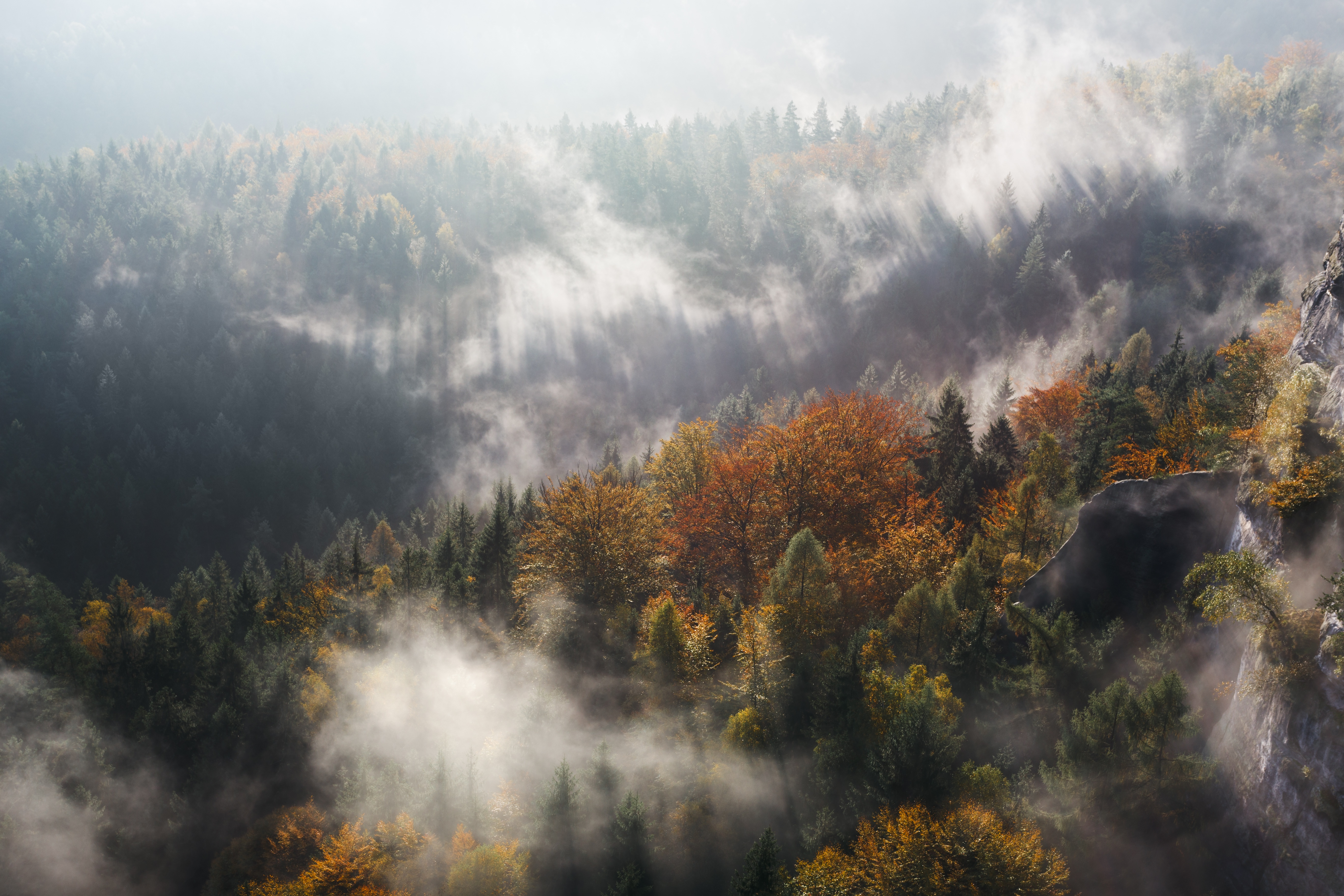 78058 download wallpaper Nature, Trees, Mountains, Vertex, Top, Fog screensavers and pictures for free